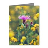 Brownray knapweed (centaurea Note Cards (Pk of 20)