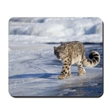 Snow leopard walking on ice Mousepad