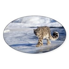 Snow leopard walking on ice Decal