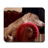 Weimaraner sleeping on red velvet armchai Mousepad
