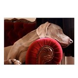 Weimaraner sleeping on re Postcards (Package of 8)