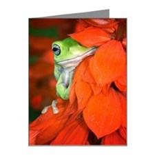 White's Tree Frog, Red Salvi Note Cards (Pk of 20)