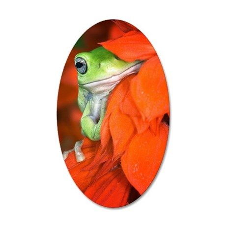 White's Tree Frog, Red Salvi 35x21 Oval Wall Decal