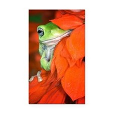 White's Tree Frog, Red Salvia Rectangle Car Magnet