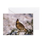Ruffed grouse in tree Greeting Card