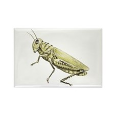 Grasshopper Rectangle Magnet (100 pack)