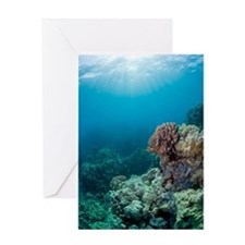 Coral reef sunburst Greeting Card