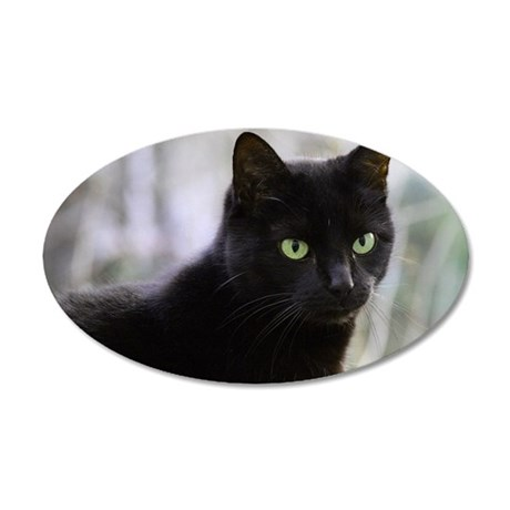 Close up of black cat 35x21 Oval Wall Decal