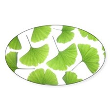 Ginko (Ginko Biloba) leaves Decal
