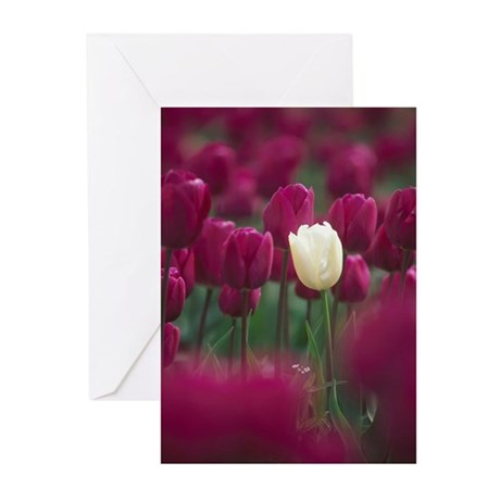 Field of purple tulips w Greeting Cards (Pk of 20)
