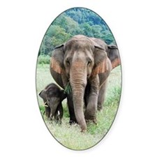 Close up of elephants in nature par Decal