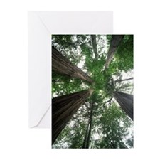 Redwood National Park Greeting Cards (Pk of 20)