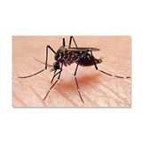 Dengue fever vector, mosquito b Car Magnet 20 x 12
