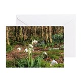 Snowdrops Greeting Cards (Pk of 20)