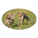 Masai Mara National Reserve, Kenya Decal