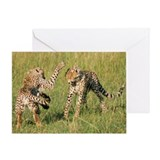 Masai Mara National Reserve, Kenya Greeting Card