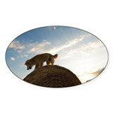 Golden retriever on bale of hay at  Decal