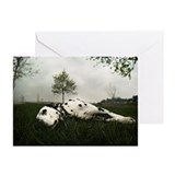 Resting Dalmatian dog Greeting Cards (Pk of 10)