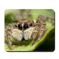 Jumping spider showing their big eyes and Mousepad