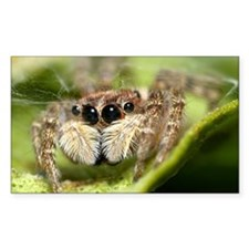 Jumping spider showing t Decal