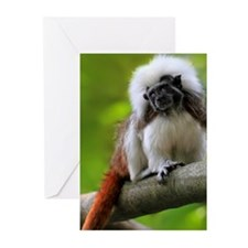 Cotton top tamarin in Si Greeting Cards (Pk of 10)