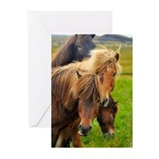Horses being curious Greeting Cards (Pk of 10)