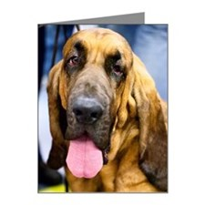 Bloodhound Note Cards (Pk of 10)