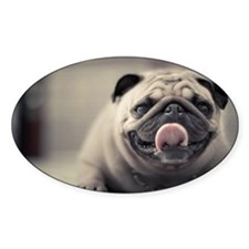 Pug putting its tongue out Decal