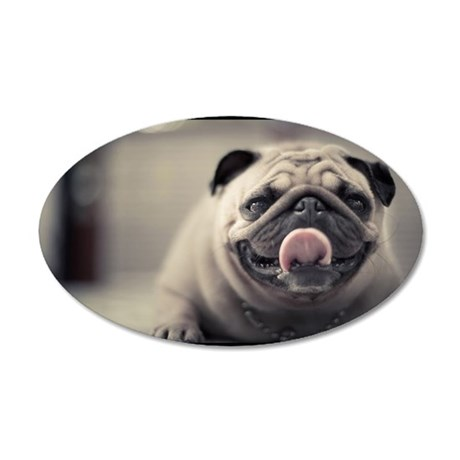 Pug putting its tongue out 35x21 Oval Wall Decal