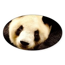 Chengdu panda base, Sichuan P Decal