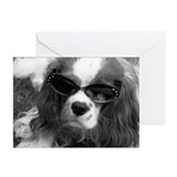 Movie Star Cavalier Greeting Cards (Pk of 10)
