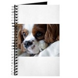 Sweet Cavalier Journal