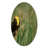 yellow-headed blackbird, xant Decal