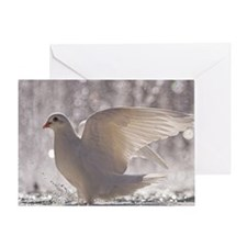 Close up of Pigeons. Greeting Card