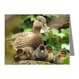 Mother Mallard duck and duck Note Cards (Pk of 10)