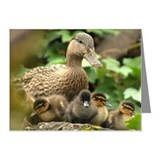 Mother Mallard duck and duck Note Cards (Pk of 20)