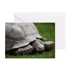 Giant tortoise Greeting Cards (Pk of 20)