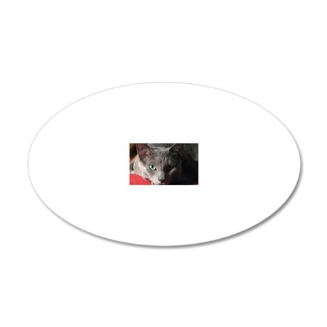Russian blue cat on red pill 20x12 Oval Wall Decal