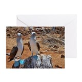 Blue-footed Boobies (Sula nebouxii)  Greeting Card