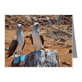 Blue-footed Boobies (Sula ne Note Cards (Pk of 20)