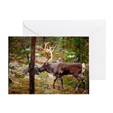 A reindeer bull in a forest. Greeting Card