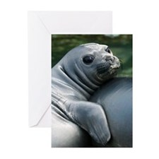 South Georgia Island, Su Greeting Cards (Pk of 10)