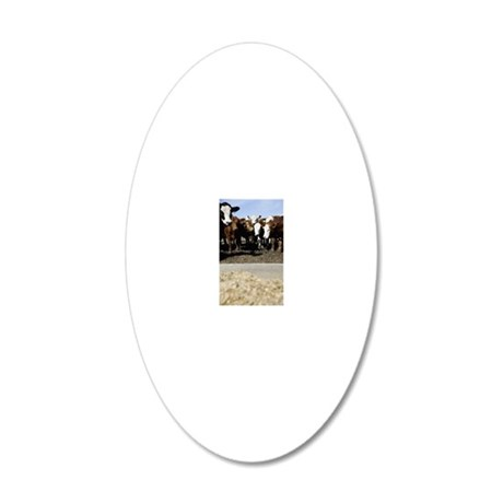 Herded Cattle 20x12 Oval Wall Decal