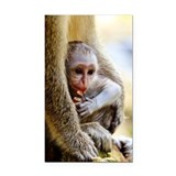 Young green monkey held by mo Rectangle Car Magnet