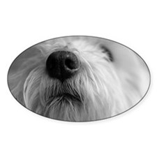 West highland terrier's nose Decal