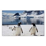 Gentoo penguins on Danko Islan Decal
