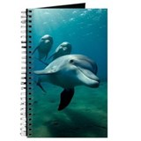 Dolphin flight Journal