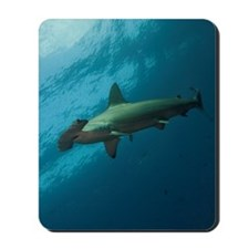 Hammerhead shark in Galapagos. Mousepad
