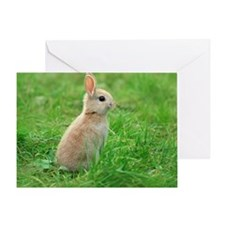 A rabbit standing Greeting Card