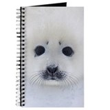 Harp Seal pup on ice Journal